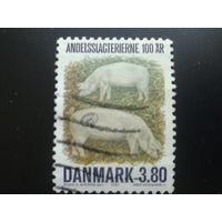 Дания 1987 свиньи