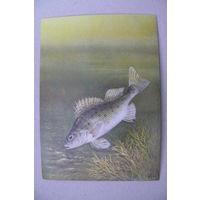 Исаков А., Ёрш; 1987, чистая (на обороте описание; рыбы).