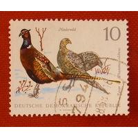Германия. Птицы. ( 1 марка ) 1968 года.