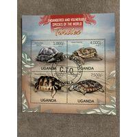 Уганда 2013. Черепахи. Малый лист