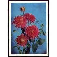 1974 год Г.Костенко Цветы 2 чист