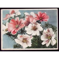 Германия Цветы 150
