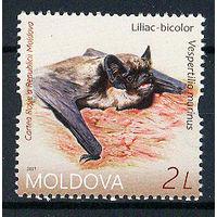 2017 Молдова. Летучие мыши