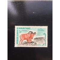 Мавритания. Гривастый баран