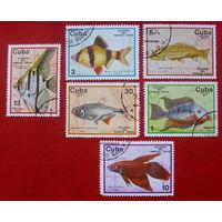Куба. Рыбки. ( 6 марок ) 1977 года.