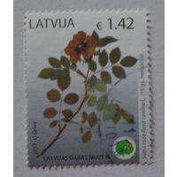 Латвия.2017.шиповник