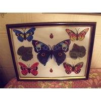 Панно Эффект бабочки