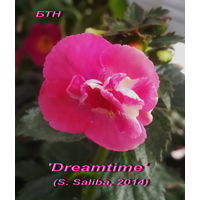 Ахименес 'Dreamtime' (S. Saliba, 2014)