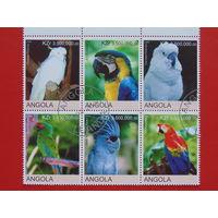 Ангола 2000 г. Птицы.