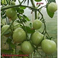 Семена томат Вашингтон