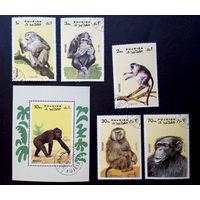 Фуджейра, ОАЭ 1971 г. Обезьяны. Фауна, полная серия из 5 марок + Блок #0135-Ф1