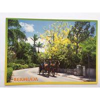 Бермудских острова