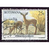 Ботсвана. Фауна. Обыкновенный стенбок (карликовая антилопа)