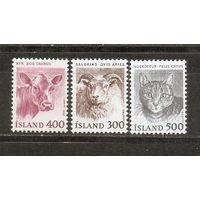 Исландия 1982 Стандарт Домашняя фауна. Кошки