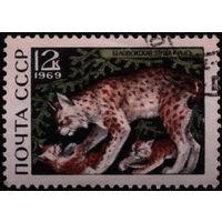 Кошки. СССР. 1969. Рысь. (#3797) Марка из серии. Гаш.