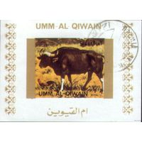 Умм-Аль-Кувейн  Блок Фауна