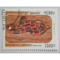 Камбоджа 1999. Змея