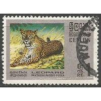 Цейлон. Леопард. 1970г. Mi#398.