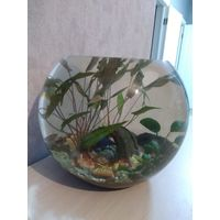 Аквариум с грунтом, растениями + грот