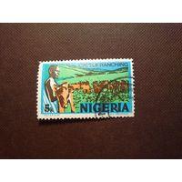 Нигерия 1973 г.Скотоводство.