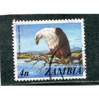 Замбия. Фауна. Орлан-крикун