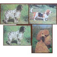 Фауна  собака 4 открытки одним лотом