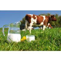 Курсовая - Повышение эффективности производства молока на примере СПК - Экономика предприятий отрасли