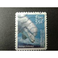 Ирландия 2009 дельфин