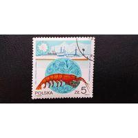 Марка Польша 1987 год. Морская фауна