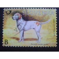 Словения 2005 собака