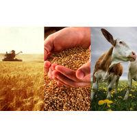 """Курсовая - Себестоимость сельскохозяйственной продукции, резервы и пути ее снижения (на примере ОАО """"НЕГОРЕЛЬСКОЕ"""") - Экономика производства АПК"""