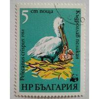 Болгария 1984. Пеликан