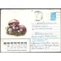 1980 год ХМК Шампиньоны 80-340