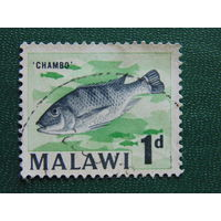 Малави.  Рыбы.