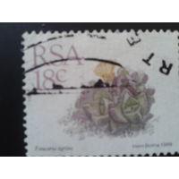 ЮАР 1989 стандарт, камнеломка