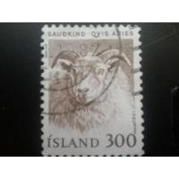 Исландия 1982 баран