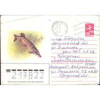 1985 год ХМК А.Исаков Щука 85-555 2