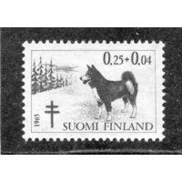 Финляндия. Собаки.