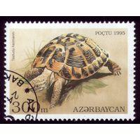 1 марка 1995 год Азербайджан Черепаха 227