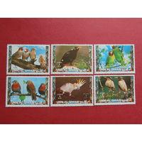 Кувейт 1973г. Птицы.