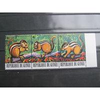 Марки - фауна, Гвинея, бурундуки