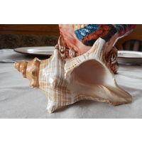 Ракушка Большая В подарок к купленной ракушке 14 см