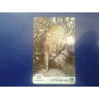 Израиль леопард