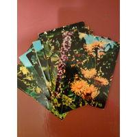 Лекарственные травы в открытках.