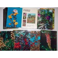 Набор открыток СССР, Экскурсия в природу