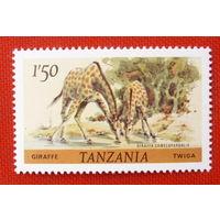 Танзания. Фауна. Жирафы. ( 1 марка ).
