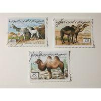 Сахара 1996. Животные