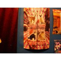 Чад. 2013. Кошки и коты. фауна **
