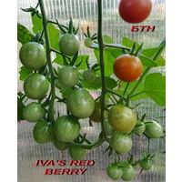 Семена томата IVA'S RED BERRY (черри)