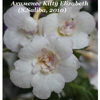 Ахименес Kitty Elizabeth (S.Saliba, 2010)